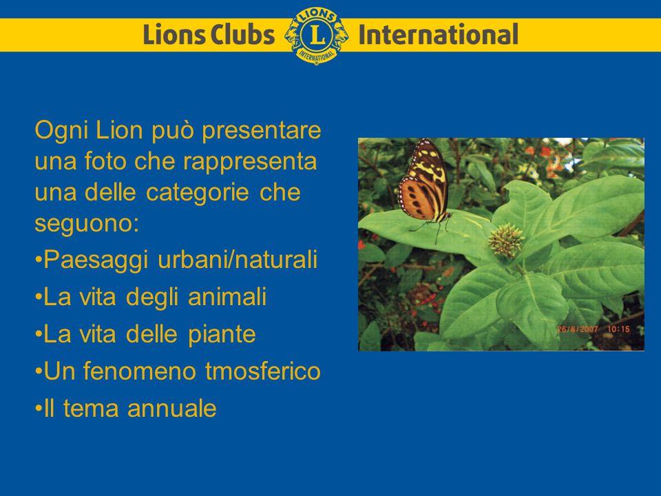 Ogni Lion può presentare una foto che rappresenta una delle categorie che seguono: Paesaggi urbani/naturali La vita degli animali La vita delle piante Un fenomeno tmosferico Il tema annuale