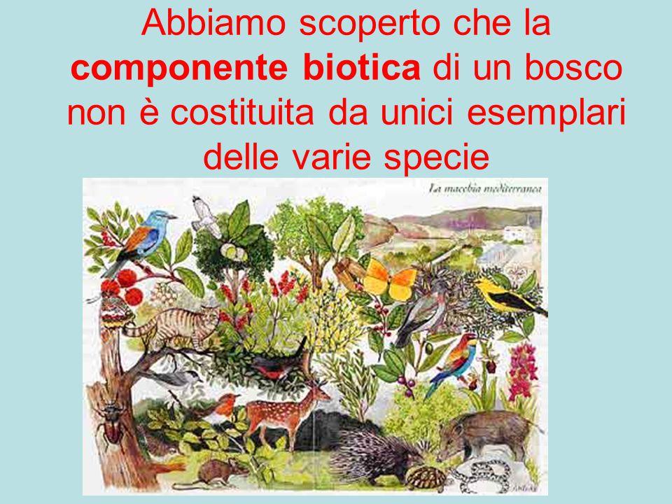 Abbiamo scoperto che la componente biotica di un bosco non è costituita da unici esemplari delle varie specie