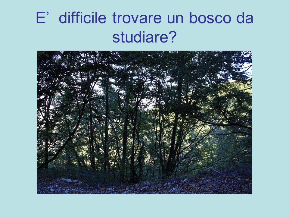 E' difficile trovare un bosco da studiare?