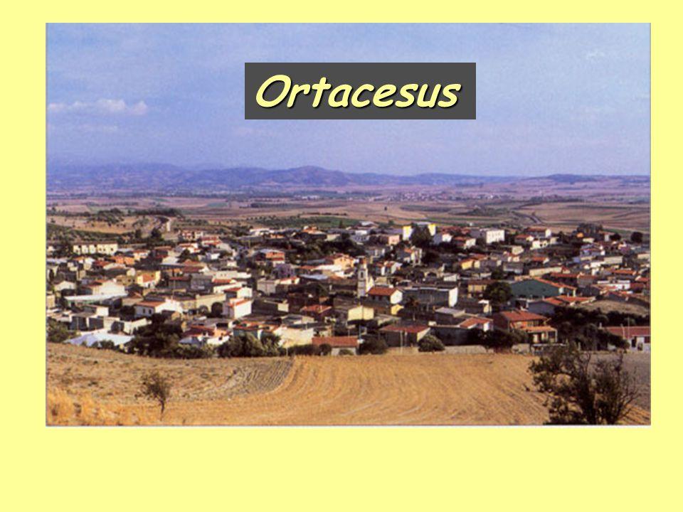 Ortacesus