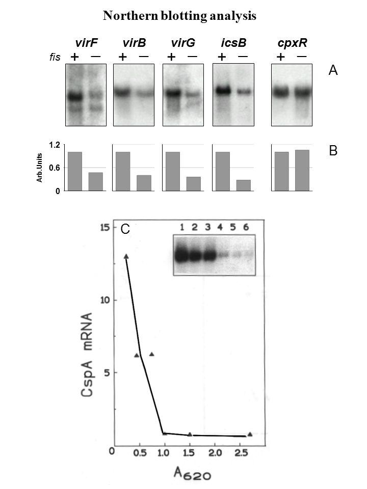 Schema della costruzione di un plasmide ricombinante, e della successiva propagazione (amplificazione operata dalle cellule batteriche).
