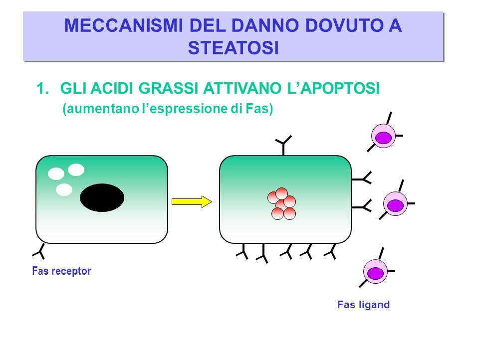 Spazio portale 1.– Ostacolo al deflusso venoso (es.