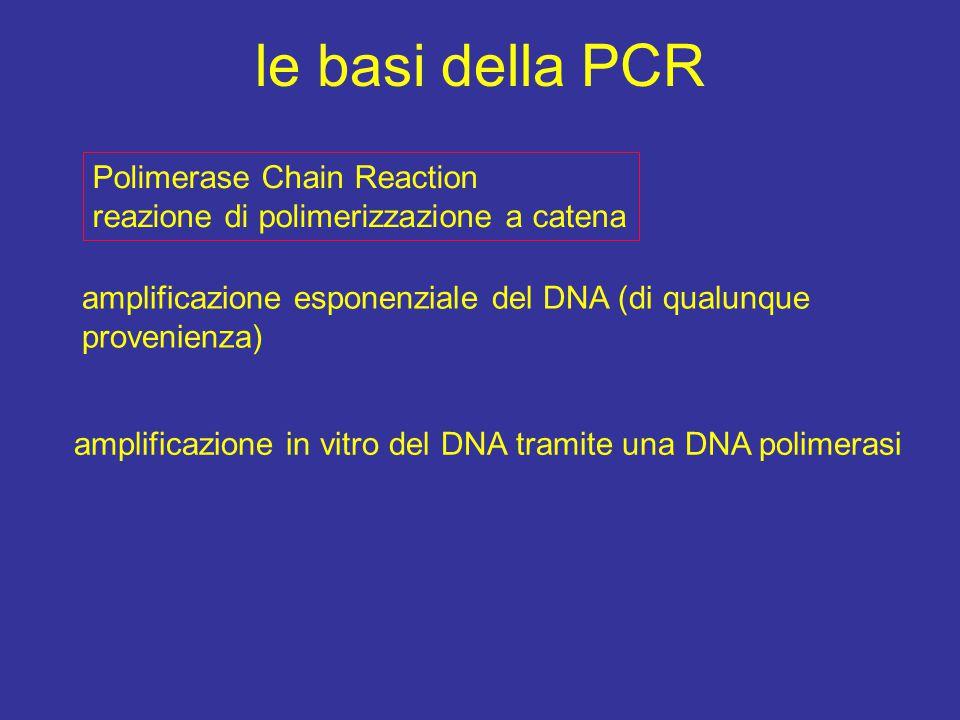 le basi della PCR Polimerase Chain Reaction reazione di polimerizzazione a catena amplificazione esponenziale del DNA (di qualunque provenienza) amplificazione in vitro del DNA tramite una DNA polimerasi