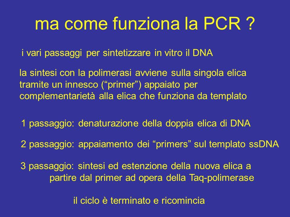 i vari passaggi per sintetizzare in vitro il DNA la sintesi con la polimerasi avviene sulla singola elica tramite un innesco ( primer ) appaiato per complementarietà alla elica che funziona da templato 1 passaggio: denaturazione della doppia elica di DNA 2 passaggio: appaiamento dei primers sul templato ssDNA 3 passaggio: sintesi ed estenzione della nuova elica a partire dal primer ad opera della Taq-polimerase il ciclo è terminato e ricomincia ma come funziona la PCR