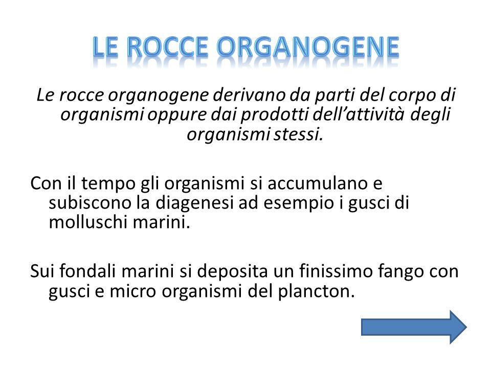 Le rocce organogene derivano da parti del corpo di organismi oppure dai prodotti dell'attività degli organismi stessi. Con il tempo gli organismi si a