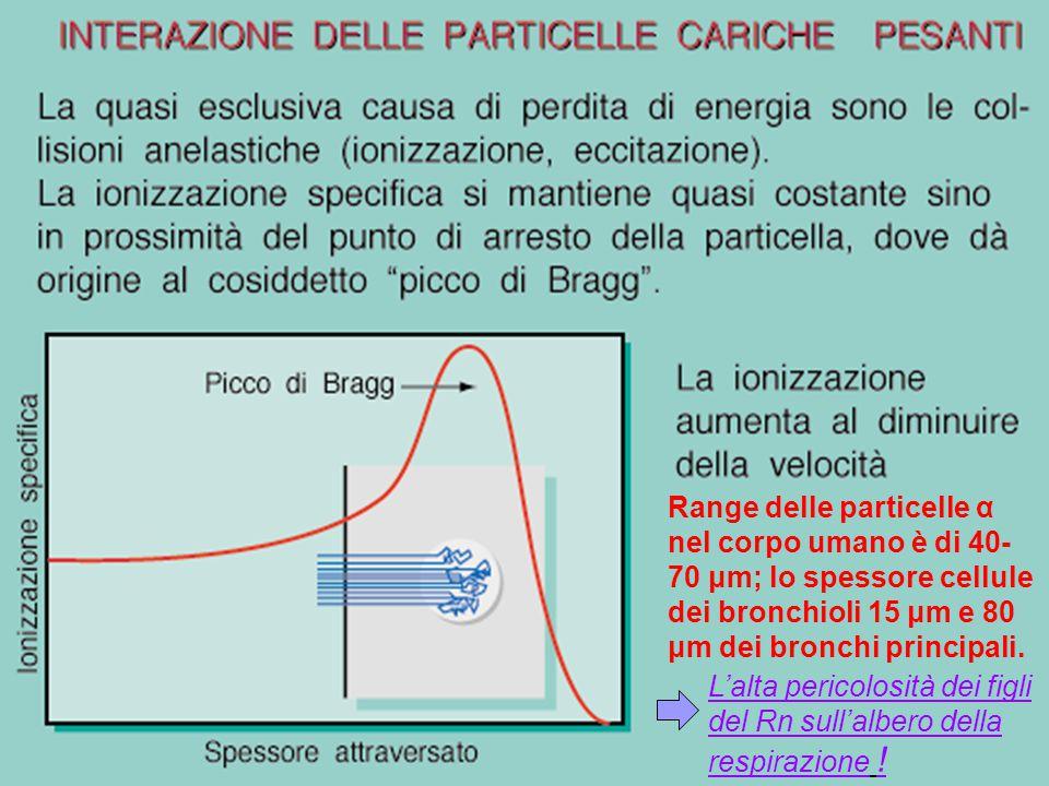 28 Rilascio di energia nei tessuti biologici Se una particella carica pesante entra nella materia è rallentata prevalentemente da numerose collisioni