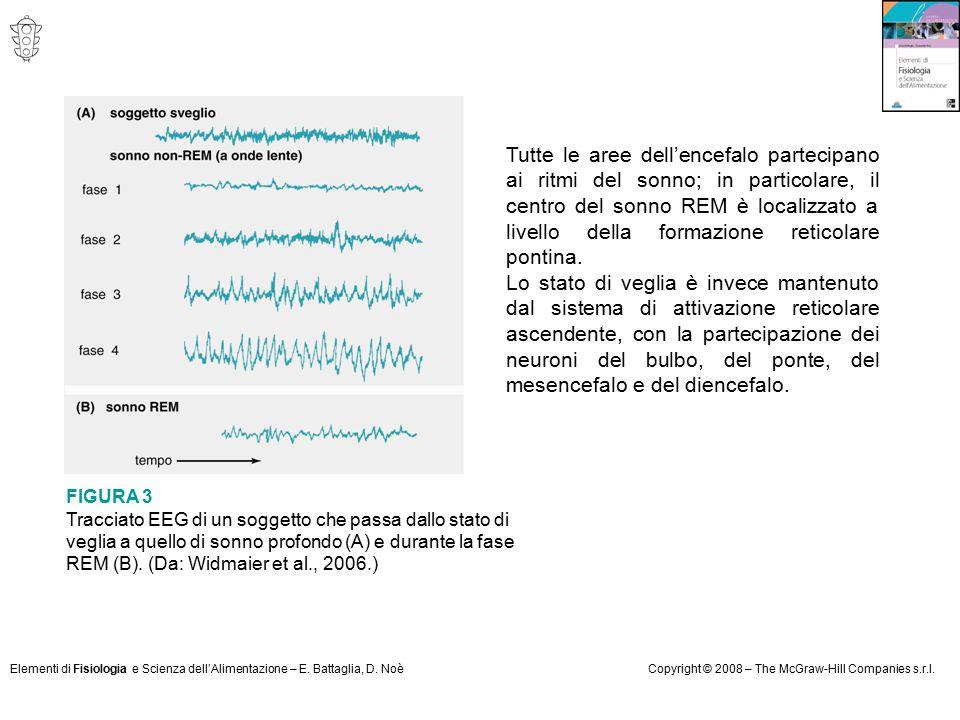Elementi di Fisiologia e Scienza dell'Alimentazione – E. Battaglia, D. NoèCopyright © 2008 – The McGraw-Hill Companies s.r.l. Tutte le aree dell'encef