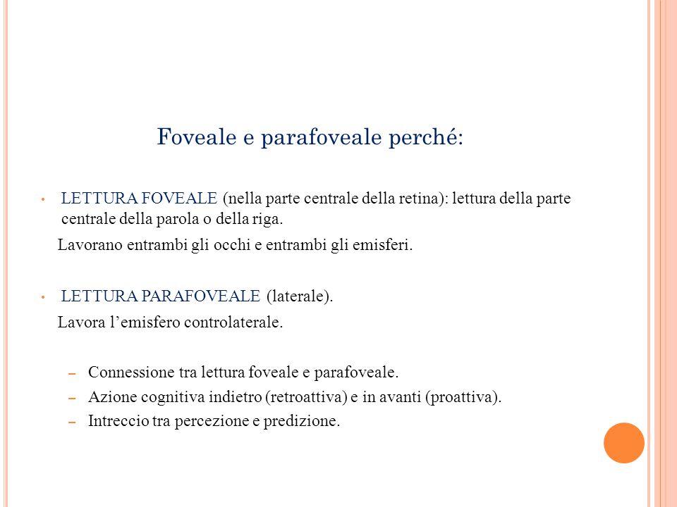 Foveale e parafoveale perché: LETTURA FOVEALE (nella parte centrale della retina): lettura della parte centrale della parola o della riga. Lavorano en