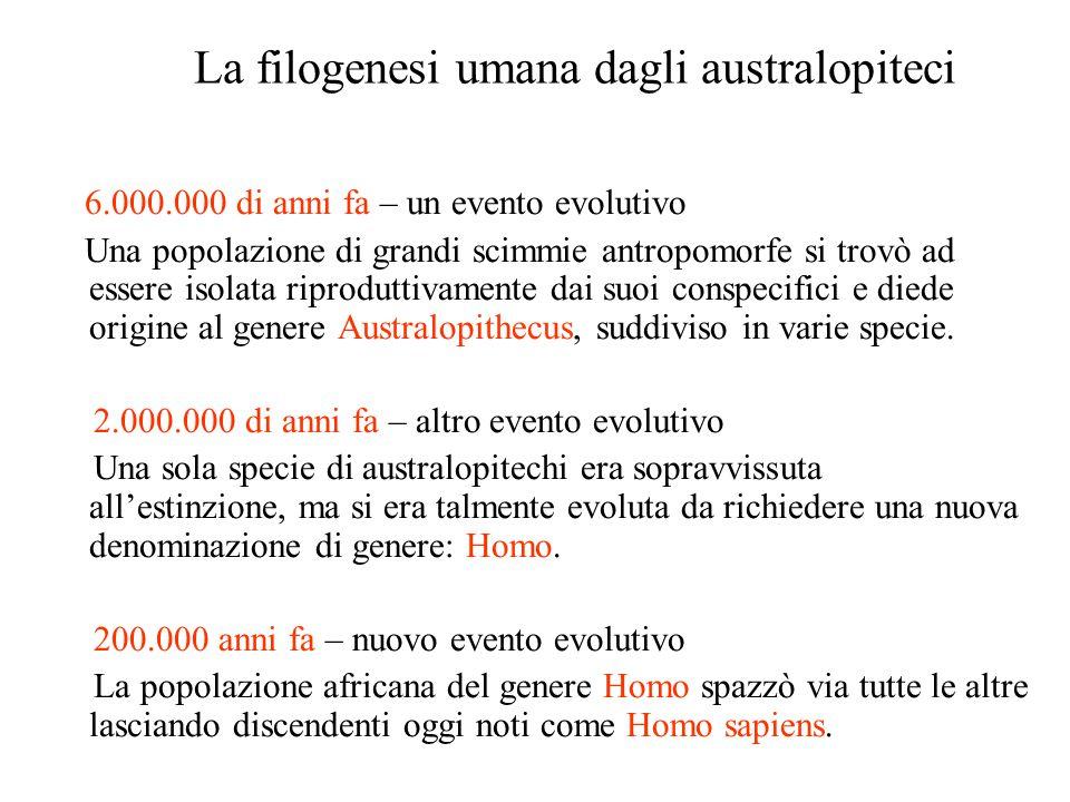 La filogenesi umana dagli australopiteci 6.000.000 di anni fa – un evento evolutivo Una popolazione di grandi scimmie antropomorfe si trovò ad essere