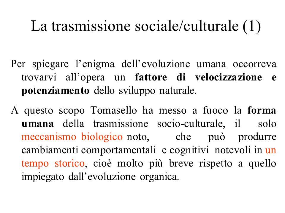La trasmissione sociale/culturale (1) Per spiegare l'enigma dell'evoluzione umana occorreva trovarvi all'opera un fattore di velocizzazione e potenziamento dello sviluppo naturale.