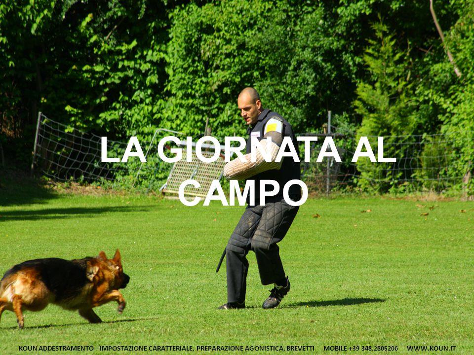 LO STIMOLO DEL GIOCO Il lavoro che eseguiamo con il cane all'interno del campo d'addestramento risulta molto più agevole se il cane ha un ELEVATO STIMOLO.