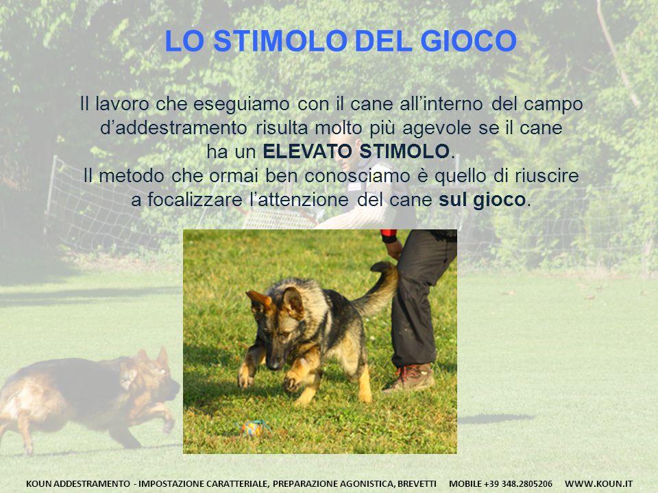 LO STIMOLO DEL CIBO Il secondo metodo per ottenere un ELEVATO STIMOLO sul cane è quello derivante dalla fame, cercando di focalizzare l'attenzione del cane sul cibo.