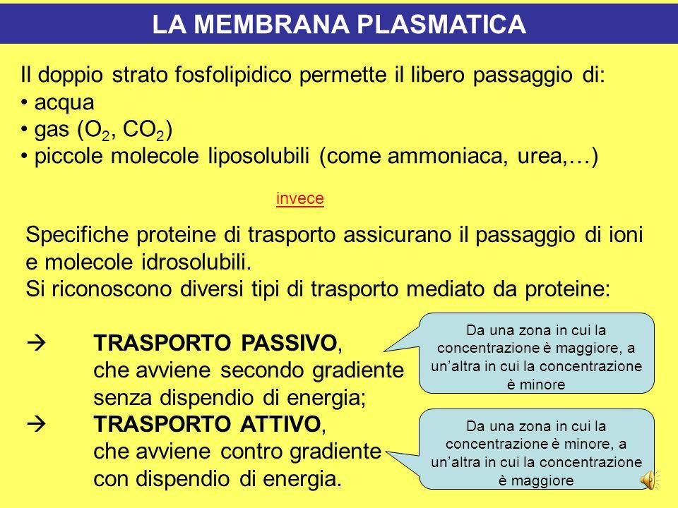 Le vie di passaggio attraverso la membrana plasmatica   