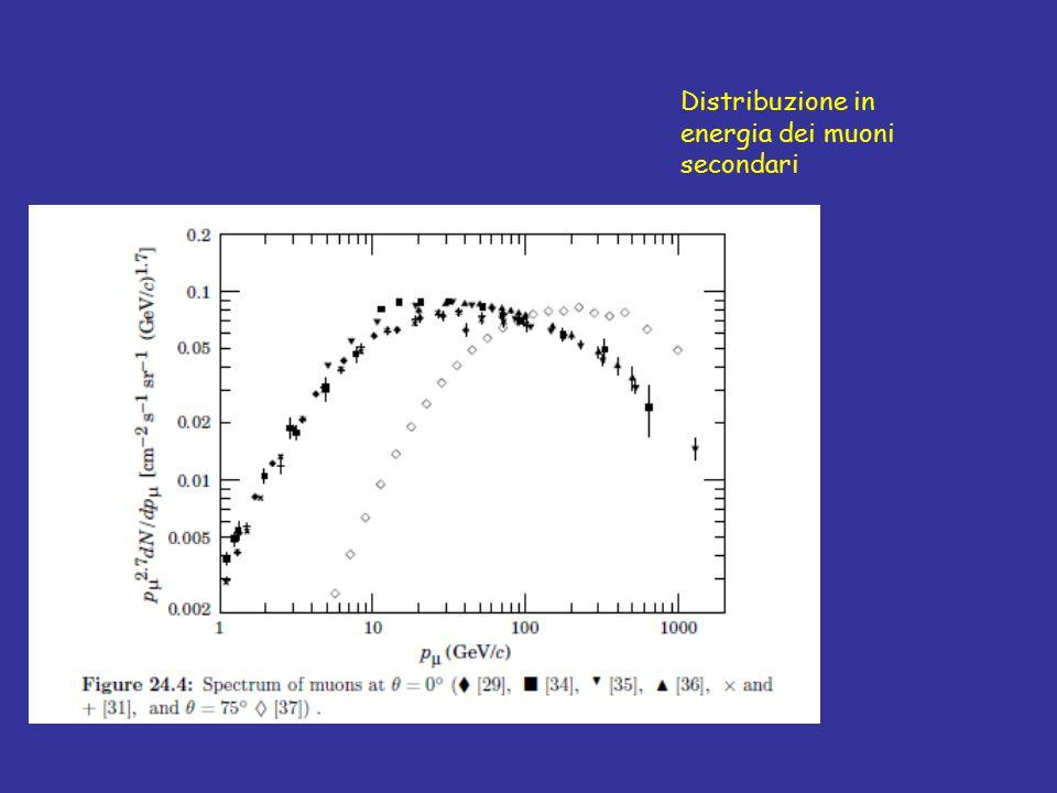 Distribuzione in energia dei muoni secondari