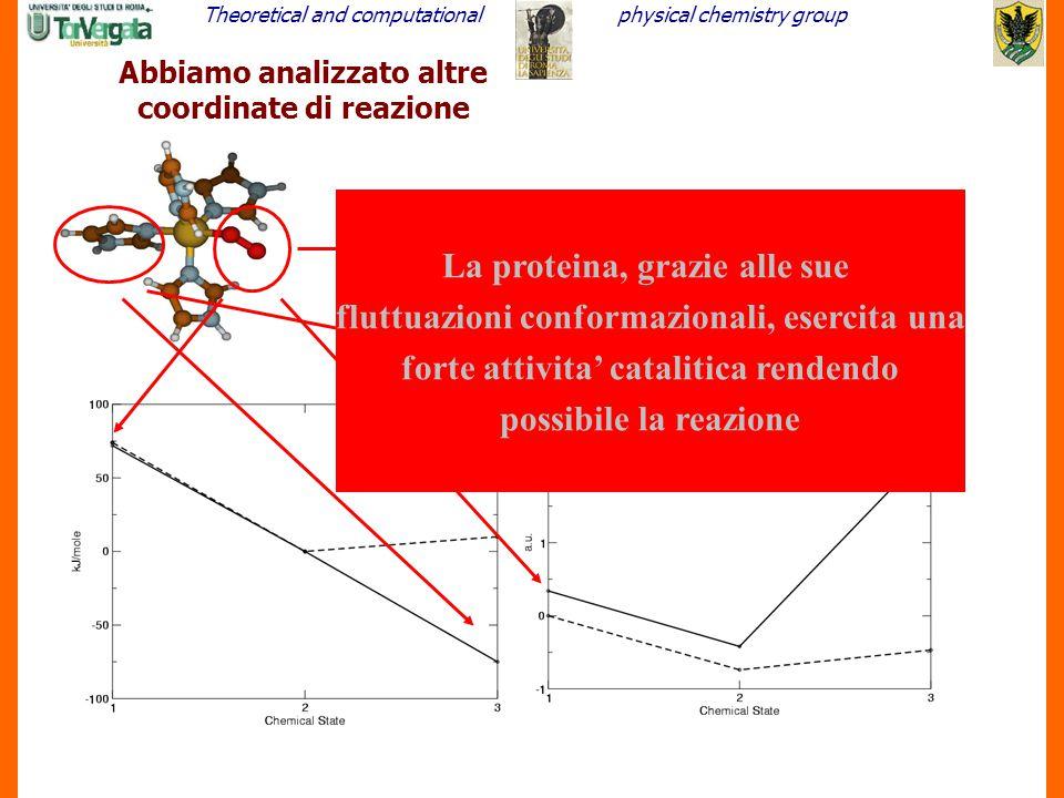 Theoretical and computationalphysical chemistry group 22 Abbiamo analizzato altre coordinate di reazione La proteina, grazie alle sue fluttuazioni con