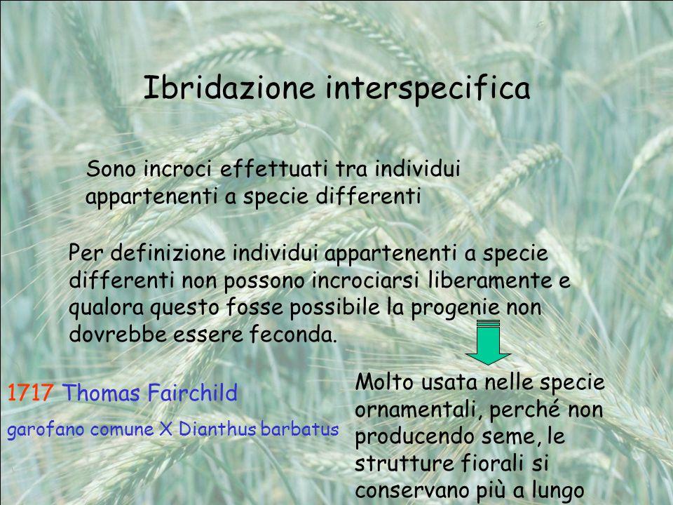 Ibridazione interspecifica Sono incroci effettuati tra individui appartenenti a specie differenti Per definizione individui appartenenti a specie diff