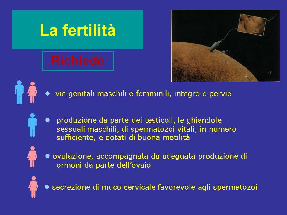 La fertilità Richiede produzione da parte dei testicoli, le ghiandole sessuali maschili, di spermatozoi vitali, in numero sufficiente, e dotati di buo