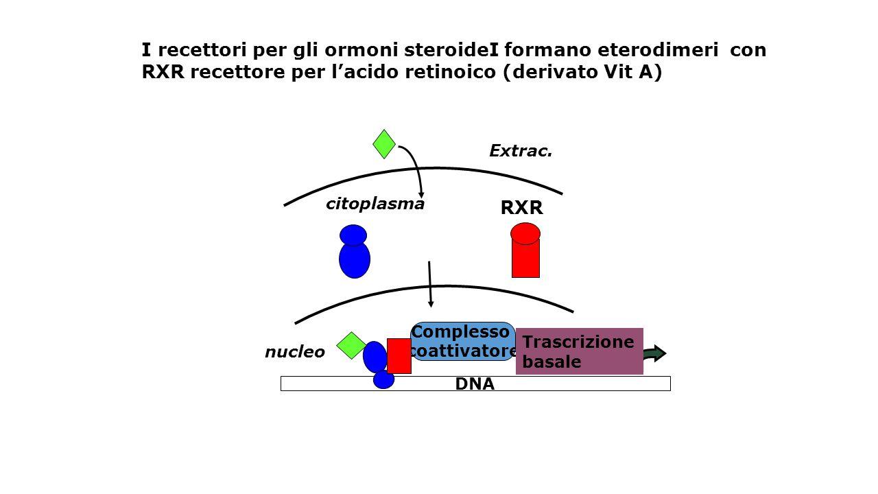 INSULINA Aumenta sintesi dell'enzima piruvato chinasi ed aumenta il flusso glicolitico (per dare precurosi per la sintesi degli acidi grassi).