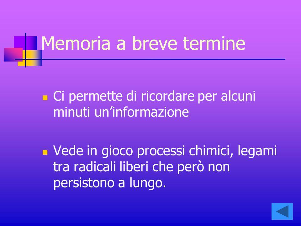 Memoria a breve termine Ci permette di ricordare per alcuni minuti un'informazione Vede in gioco processi chimici, legami tra radicali liberi che però non persistono a lungo.