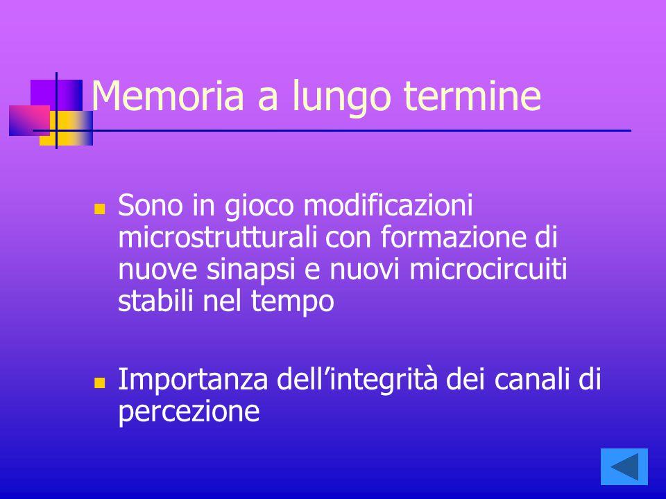 Memoria a lungo termine Sono in gioco modificazioni microstrutturali con formazione di nuove sinapsi e nuovi microcircuiti stabili nel tempo Importanza dell'integrità dei canali di percezione
