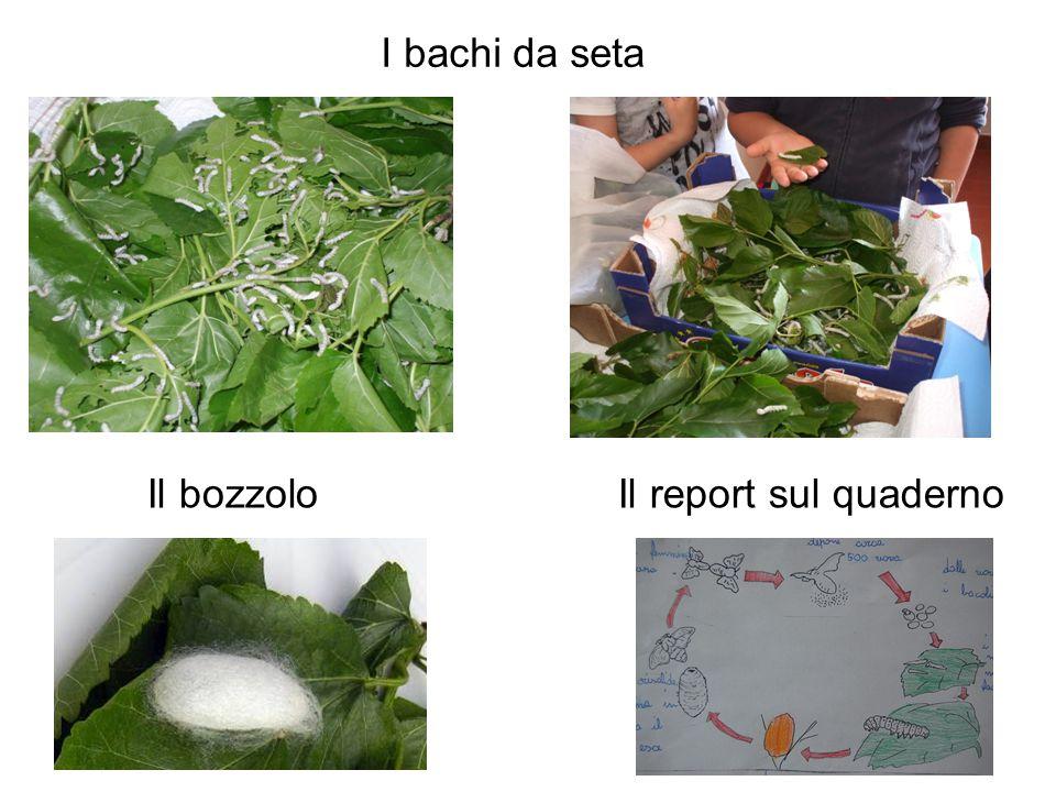 I bachi da seta Il bozzoloIl report sul quaderno