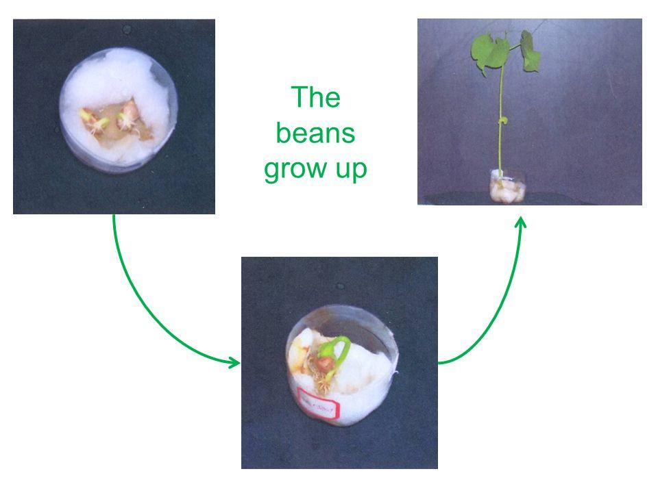 Attività ed esperimenti Esempio n.2 Classe II: children aged 7-8 Titolo: piantiamo una siepe Descrizione attività: i bambini piantano nel giardino della scuola una siepe di piante tipiche della pianura padana; Materiali per l'attività: piantine, attrezzi da giardinaggio.