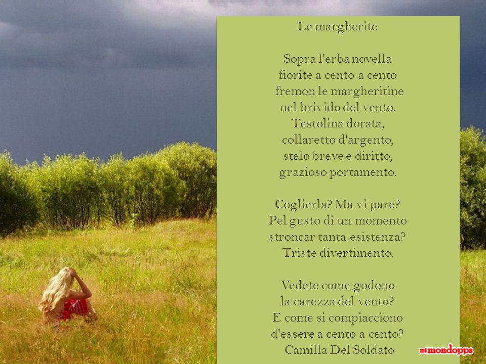 Le margherite Sopra l erba novella fiorite a cento a cento fremon le margheritine nel brivido del vento.