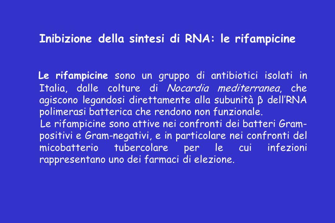 Inibizione della sintesi di RNA: le rifampicine Le rifampicine sono un gruppo di antibiotici isolati in Italia, dalle colture di Nocardia mediterranea, che agiscono legandosi direttamente alla subunità β dell'RNA polimerasi batterica che rendono non funzionale.