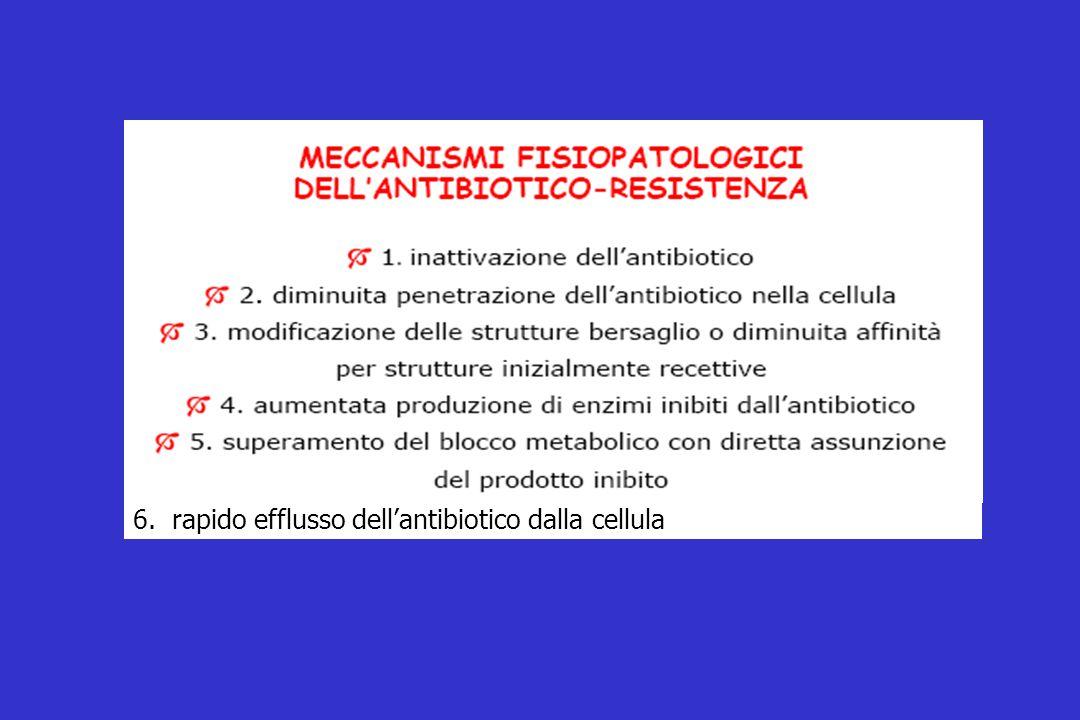 6. rapido efflusso dell'antibiotico dalla cellula