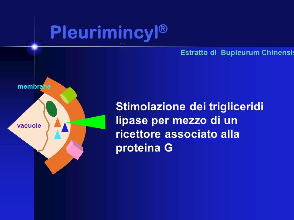 Pleurimincyl ® Pleurimincyl ® Estratto di Bupleurum Chinensis Stimolazione dei trigliceridi lipase per mezzo di un ricettore associato alla proteina G membrane vacuole