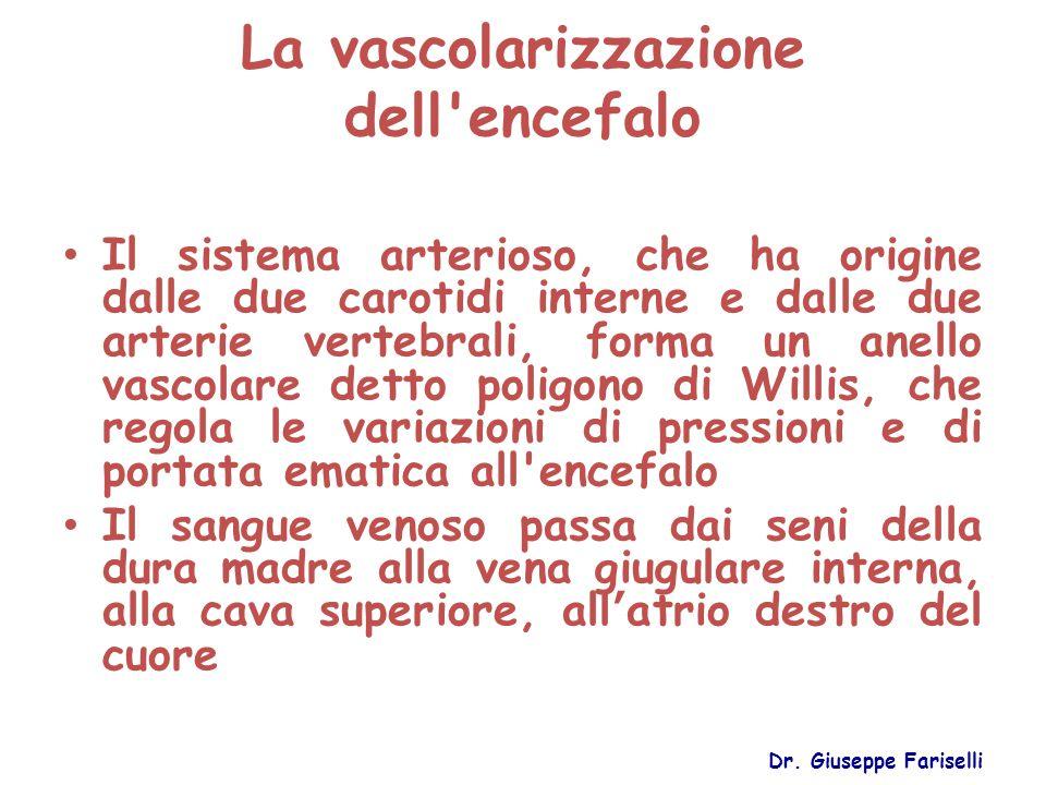 La vascolarizzazione dell'encefalo Il sistema arterioso, che ha origine dalle due carotidi interne e dalle due arterie vertebrali, forma un anello vas