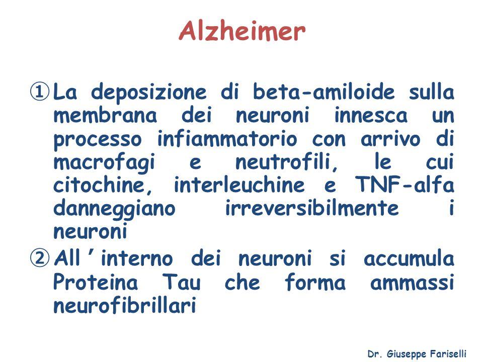 Alzheimer ① La deposizione di beta-amiloide sulla membrana dei neuroni innesca un processo infiammatorio con arrivo di macrofagi e neutrofili, le cui