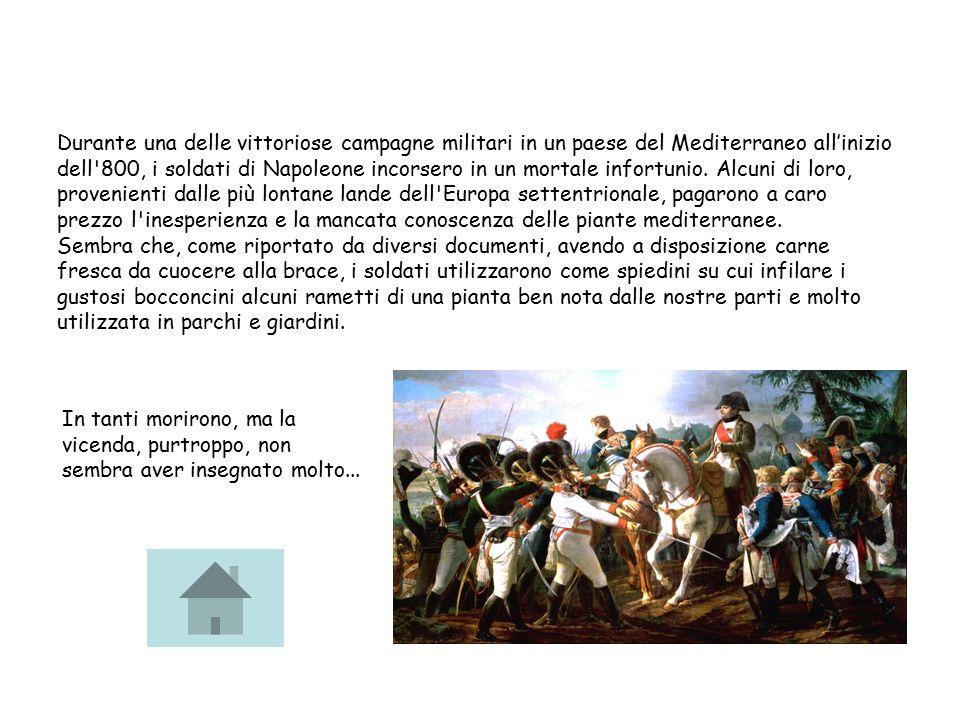 Durante una delle vittoriose campagne militari in un paese del Mediterraneo all'inizio dell 800, i soldati di Napoleone incorsero in un mortale infortunio.