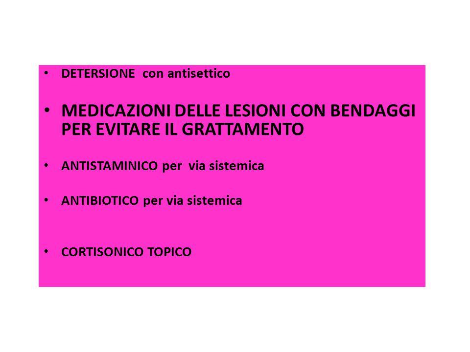 DETERSIONE con antisettico MEDICAZIONI DELLE LESIONI CON BENDAGGI PER EVITARE IL GRATTAMENTO ANTISTAMINICO per via sistemica ANTIBIOTICO per via siste
