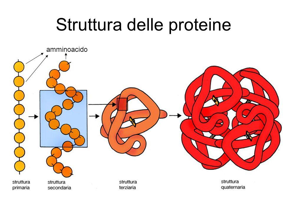 Denaturazione delle proteine