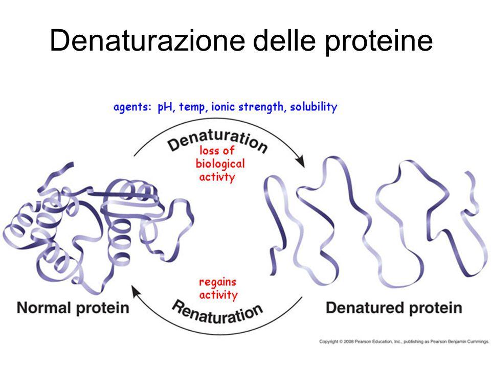Cottura dell'uovo Quando la temperatura supera i 62 °C (68 °C per le proteine del tuorlo) le molecole proteiche si srotolano, si legano fra loro e formano un gel.