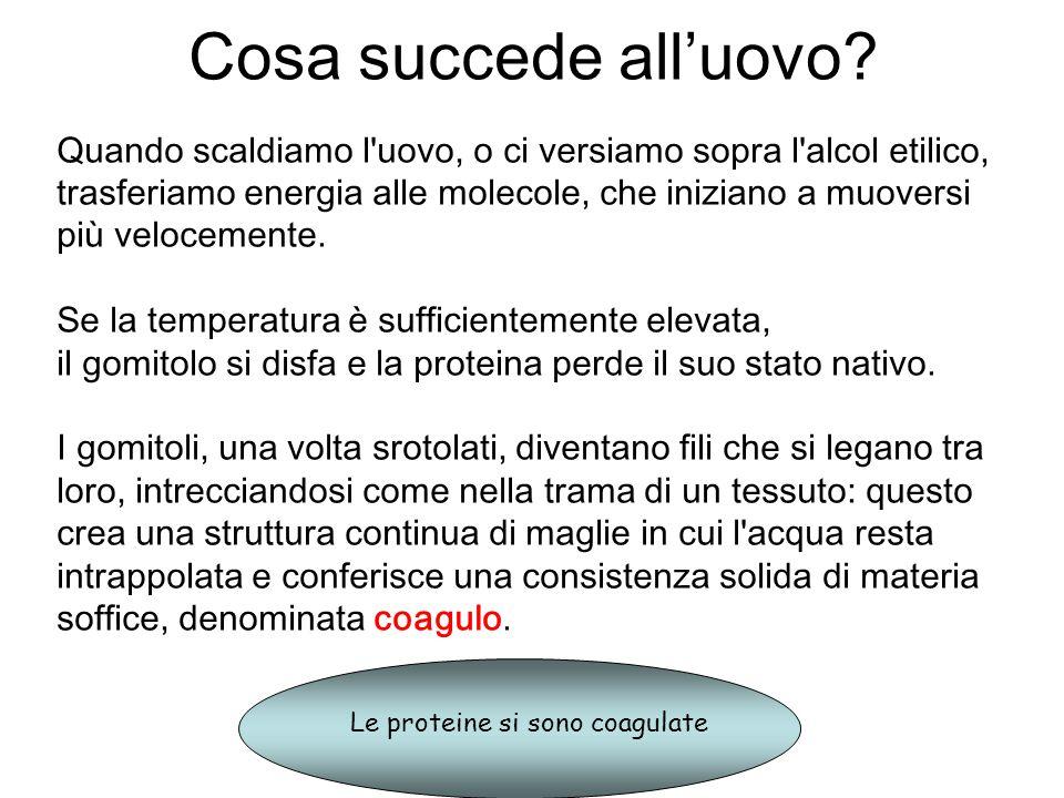 L alcol si comporta come il calore: se la concentrazione etilica è sufficientemente alta, anche a temperatura ambiente i gomitoli si svolgono e s intrecciano, creando la coagulazione.
