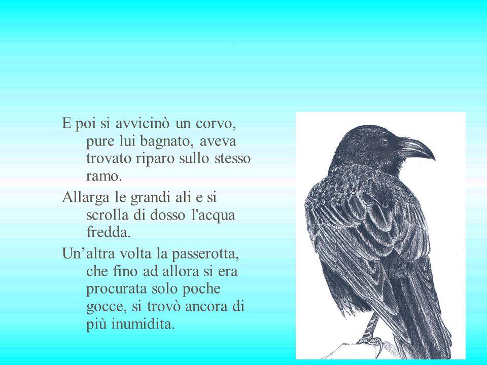 Poco dopo, un passero, anch esso sorpreso dalla pioggia, si adagia sullo stesso ramo dove si trovava la passerotta.