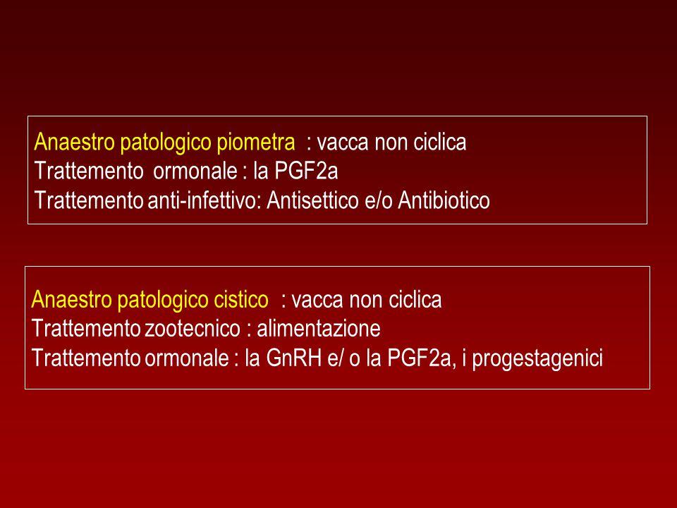 Anaestro patologico piometra : vacca non ciclica Trattemento ormonale : la PGF2a Trattemento anti-infettivo: Antisettico e/o Antibiotico Anaestro pato