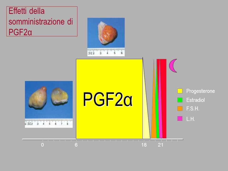 Effetti della somministrazione di PGF2α 061821 Progesterone Estradiol F.S.H. L.H. PGF2α