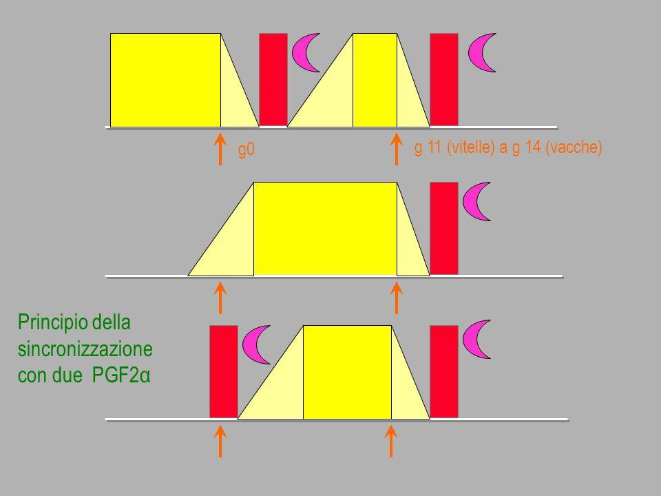 g 11 (vitelle) a g 14 (vacche) Principio della sincronizzazione con due PGF2α g0