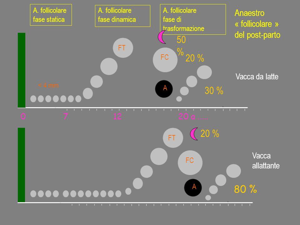 A. follicolare fase statica < 4 mm FT A. follicolare fase di trasformazione 50 % 20 % FC 20 % 071220 a..... Vacca da latte Vacca allattante A. follico