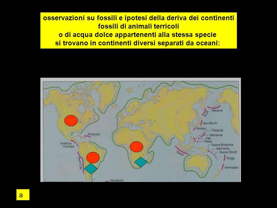 osservazioni su fossili e ipotesi della deriva dei continenti fossili di animali terricoli o di acqua dolce appartenenti alla stessa specie si trovano