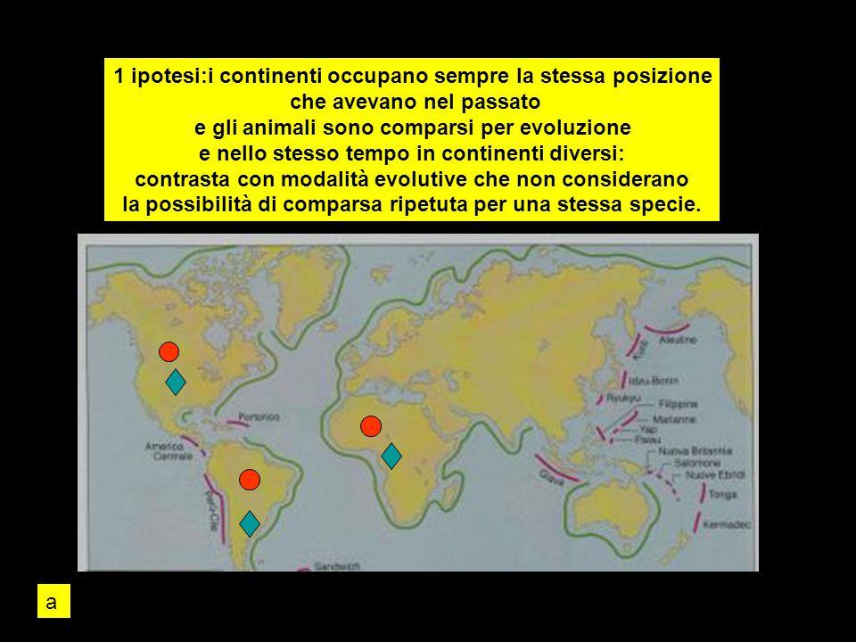 1 ipotesi:i continenti occupano sempre la stessa posizione che avevano nel passato e gli animali sono comparsi per evoluzione e nello stesso tempo in