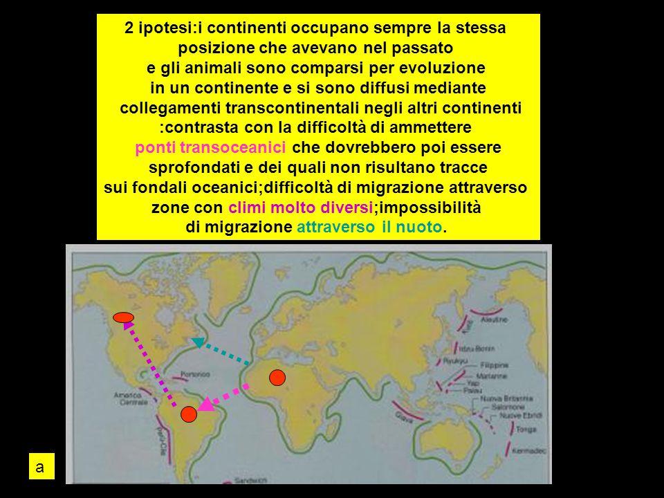 2 ipotesi:i continenti occupano sempre la stessa posizione che avevano nel passato e gli animali sono comparsi per evoluzione in un continente e si so