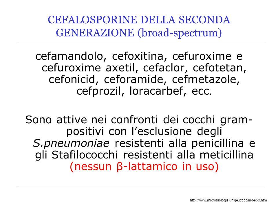 http://www.microbiologia.unige.it/dpb/indexxx.htm CEFALOSPORINE DELLA SECONDA GENERAZIONE (broad-spectrum) cefamandolo, cefoxitina, cefuroxime e cefuroxime axetil, cefaclor, cefotetan, cefonicid, ceforamide, cefmetazole, cefprozil, loracarbef, ecc.
