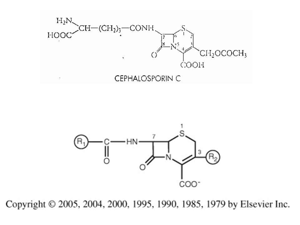 http://www.microbiologia.unige.it/dpb/indexxx.htm Cefalosporine In posizione 7 si alterano le proprietà antibatteriche, la sostituzione di H + con l'aggiunta di un gruppo metoxy, dà luogo alle cefamicine (cefotetan, cefoxitin), stabilità alle β-lattamasi e determina lo spettro; in posizione 3 si hanno modifiche alla farmacocinetica si può esterificare il gruppo carbossilico per dare origine ai profarmaci (molecole che liberano il principio attivo in vivo, molto frequente per antibiotici ad uso orale).