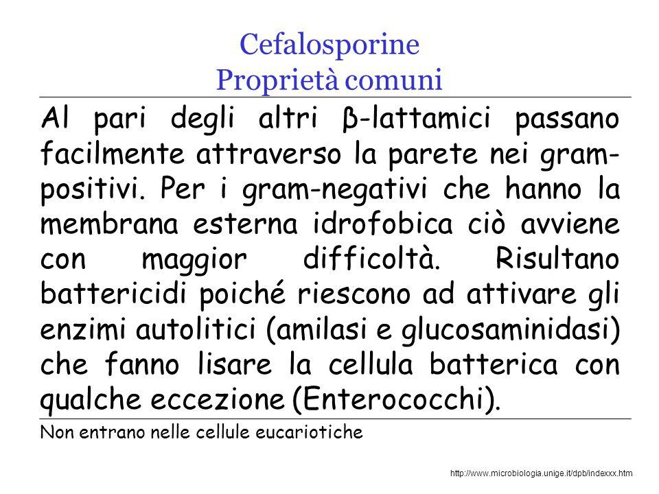 http://www.microbiologia.unige.it/dpb/indexxx.htm Cefalosporine Proprietà comuni Al pari degli altri β-lattamici passano facilmente attraverso la parete nei gram- positivi.