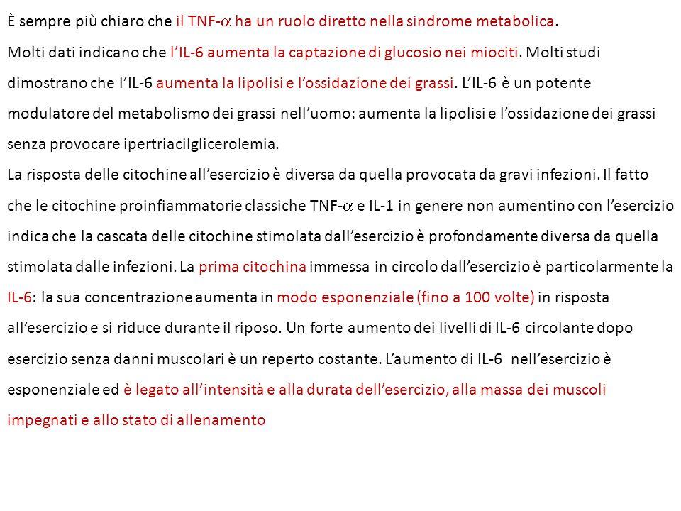 È sempre più chiaro che il TNF-  ha un ruolo diretto nella sindrome metabolica. Molti dati indicano che l'IL-6 aumenta la captazione di glucosio nei