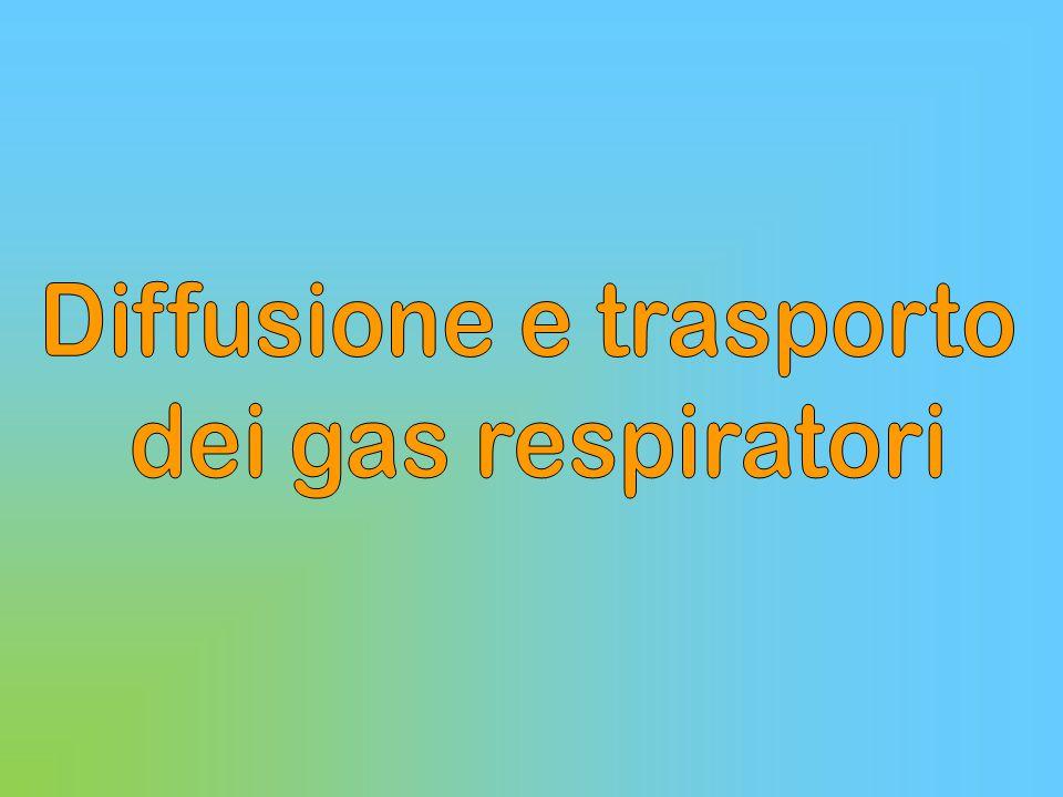 UNITA' ALVEOLO-CAPILLARE BARRIERA ARIA-SANGUE Mo Pn II Pn I Lume alveolare P / C CO2 O2O2